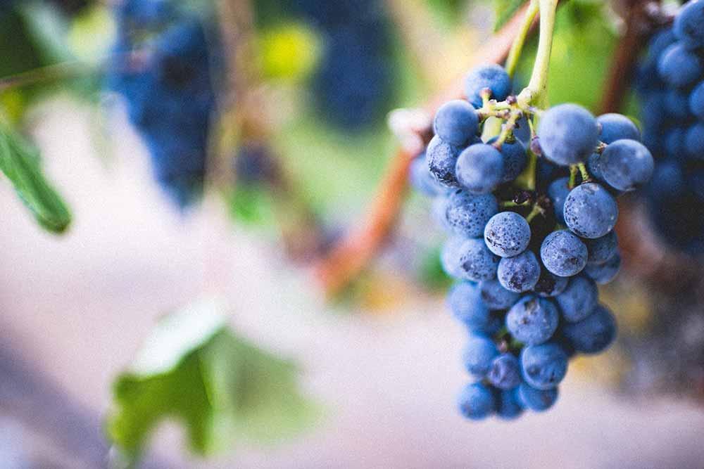Die besten Weine direkt vom Winzer